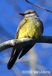 North Carolina Bird Photos