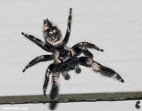 North Carolina Spider Photos