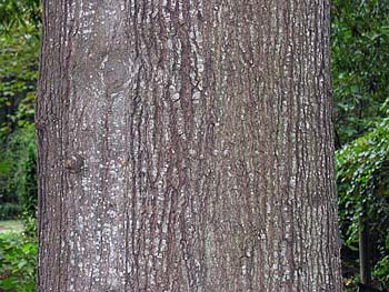 Bark of a medium-sized...
