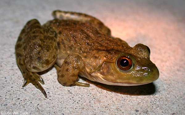 North Carolina Amphibian And Reptile Photos