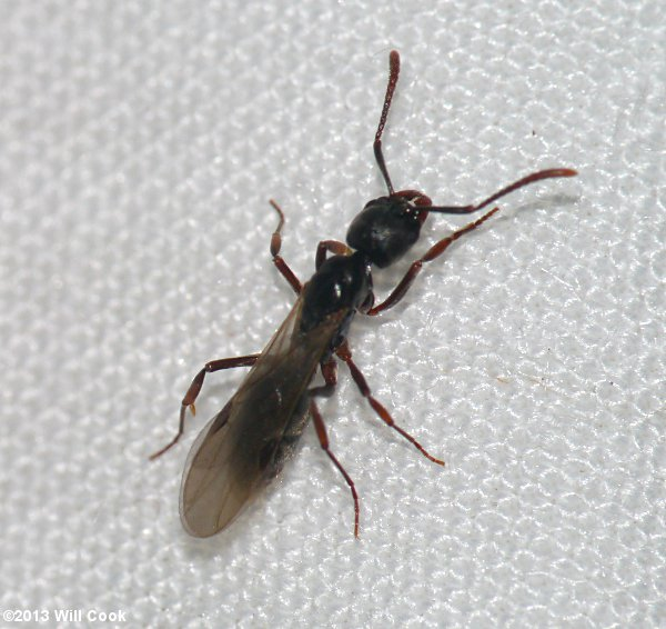 Tiny Ant Like Bugs Bindu Bhatia Astrology