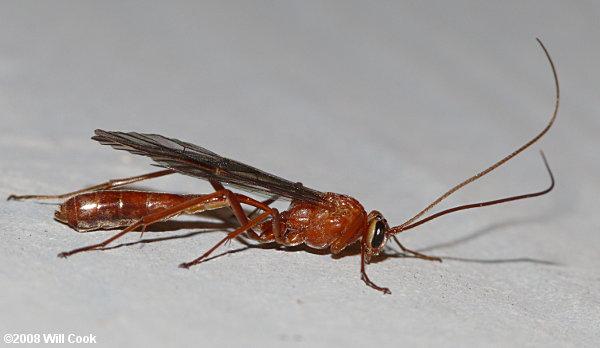 North Carolina Insect Photos
